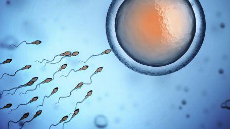 spermatozoo ovulo concepimento