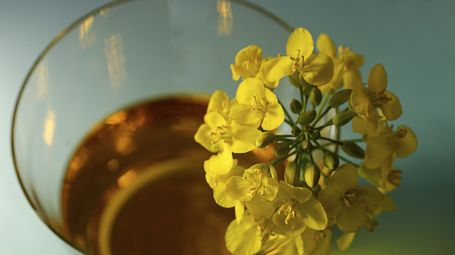 Olio, guida ai grassi vegetali