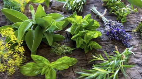 I rimedi naturali possono sostituire i farmaci?