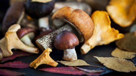 Funghi, un potente antiage