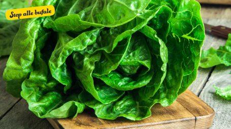 È vero che l'insalata si può fare in laboratorio?