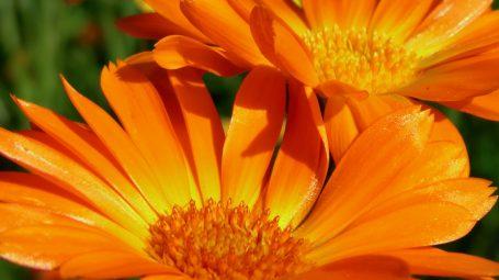 Antiage: 3 ricette con i fiori