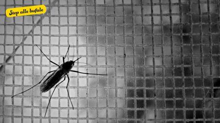 È vero che in Italia c'è la zanzara edes egypti?