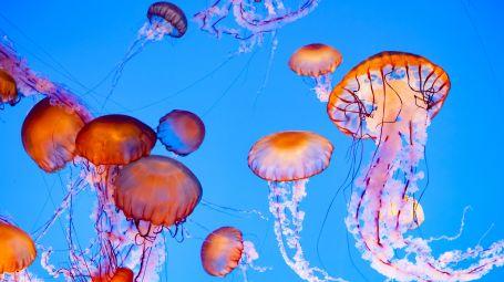 Punture di meduse: cosa fare subito