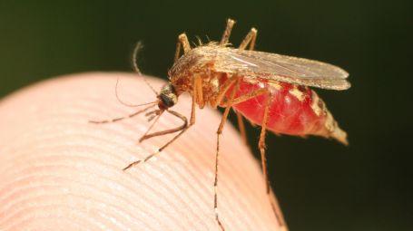 Malaria: ci si può ammalare in Italia? Le risposte ai tuoi dubbi