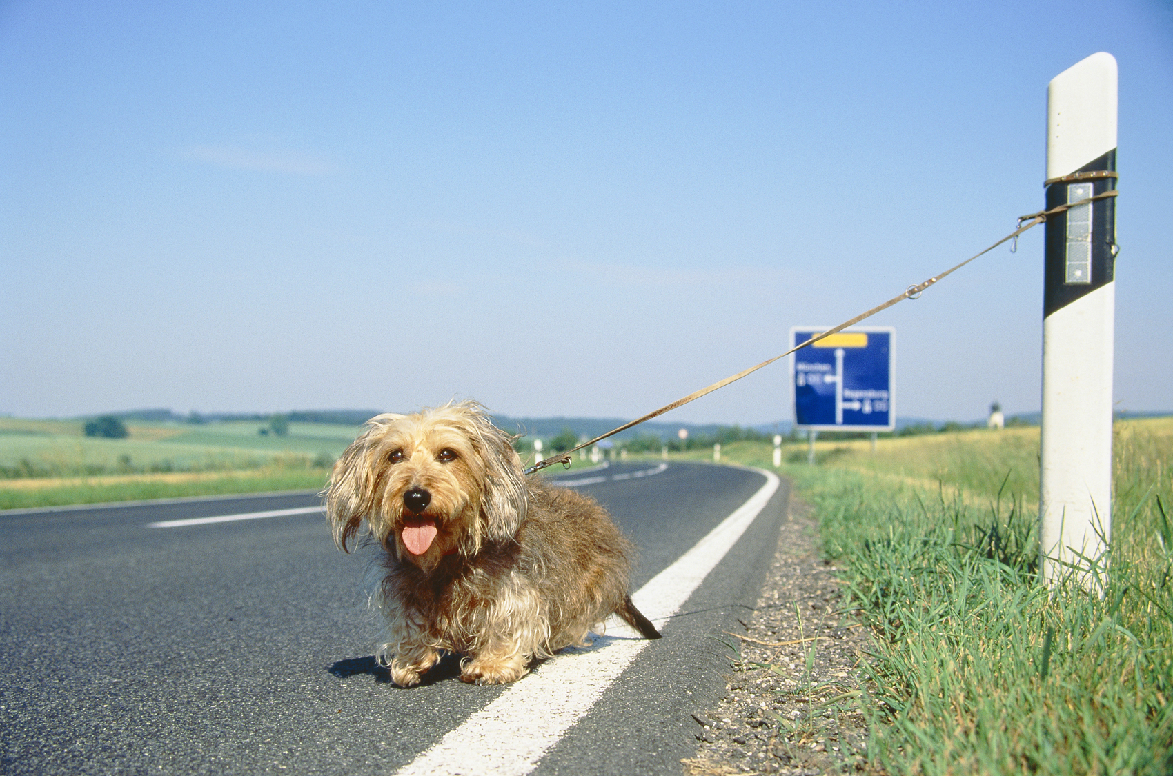 abandoned-dog-at-the-highway