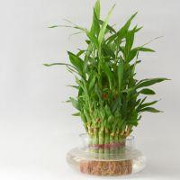 5 piante giuste da coltivare in ufficio starbene - Pianta da ufficio ...