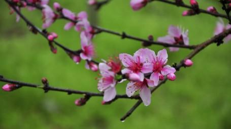Giardinaggio in quarantena: coltivare piante e fiori fa stare meglio