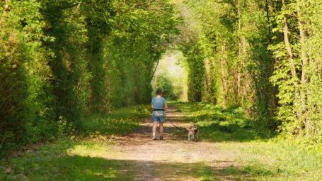 camminare nella foresta