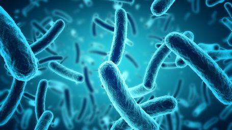 Come mantenere la flora batterica in perfetto equilibrio