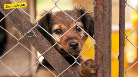 È vero che i cani randagi vengono usati come combustibile?