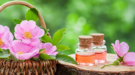 Rosa mosqueta: proprietà e utilizzi