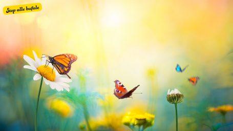 È vero che la Casa delle farfalle è un focolaio di morbillo?