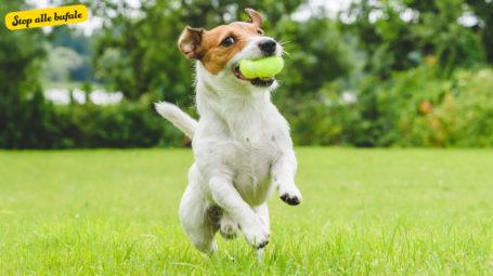 È vero che le palline da tennis sono tossiche per i cani?
