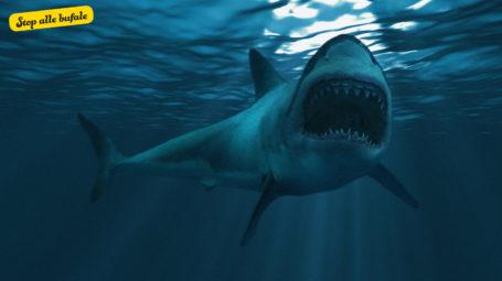 È vero che in Salento è stato avvistato uno squalo?