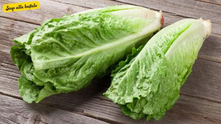 È vero che la lattuga è trattata con la plastica?