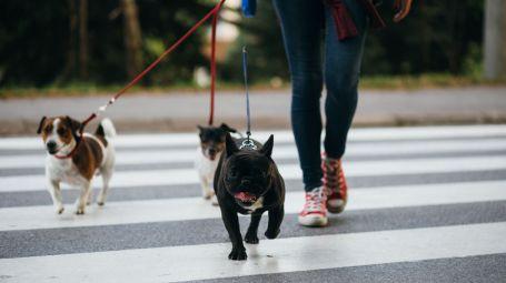 Cacche dei cani sui marcipiedi: arriva il test del Dna