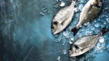 Pesca elettrica: che cos'è e perché fa male all'ambiente