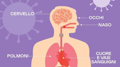 Coronavirus: come si diffonde nel corpo e quali organi attacca