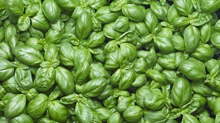 Metodo Lertola, la dieta mediterranea con soli cibi italiani