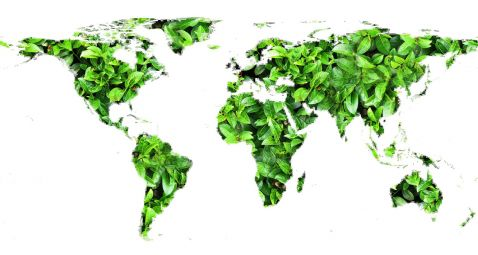 Ambiente: le iniziative a tutela delle foreste di terra e di mare